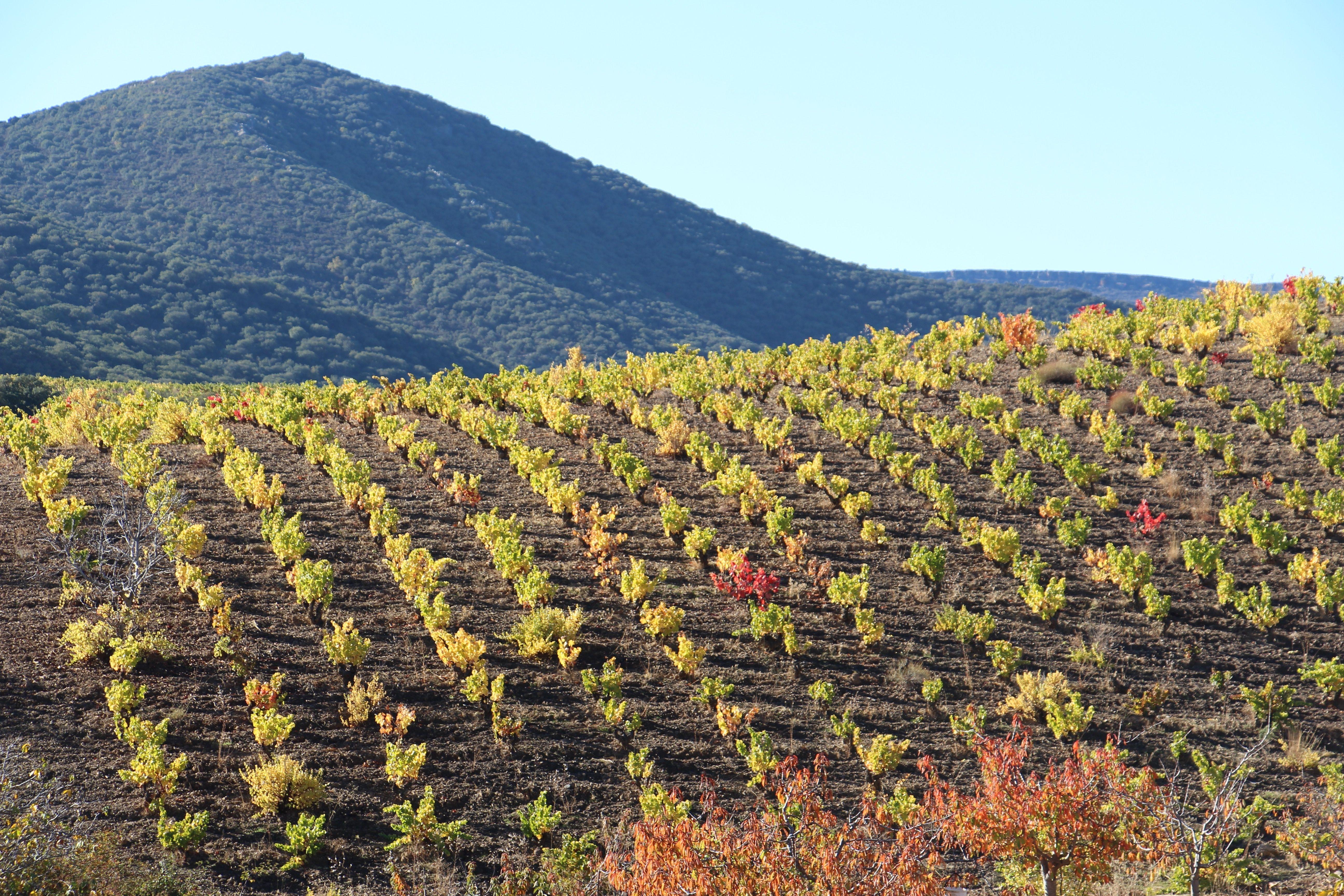 Las bodegas de la DOP Calatayud incrementan cerca de un 20% las ventas de vino durante el primer trimestre de 2020