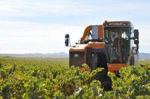 Maquina cosechadora DOP Cariñena